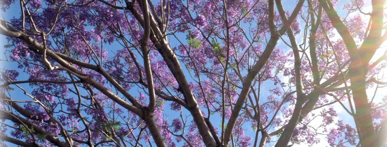 mandy collins jacaranda tree mixed media tutorials pearl maple