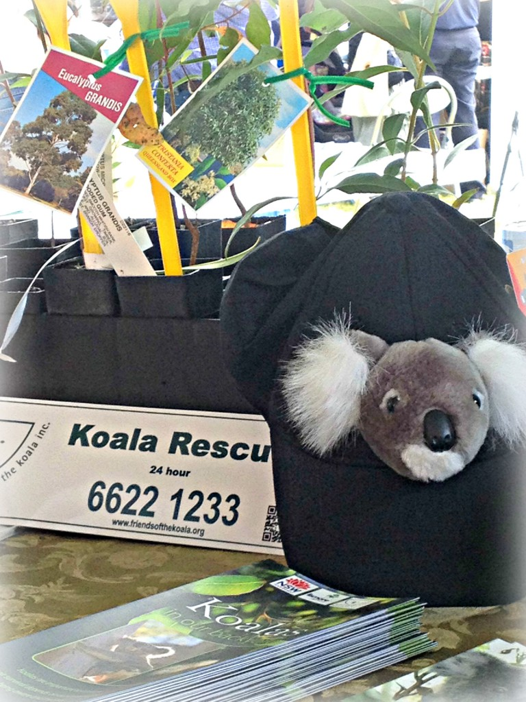 bear - friends of the koala