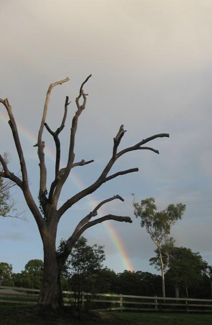 mandy-collins-australia-glimmer-mist