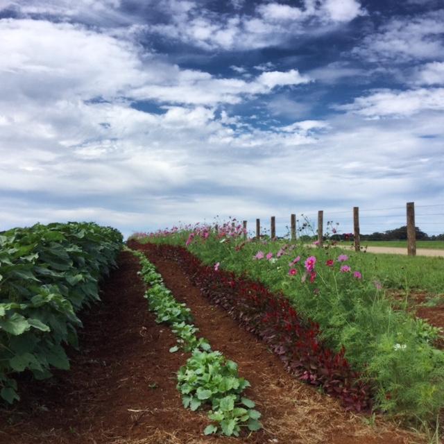 the farm at byron bay mandy collins mixed media tutorial